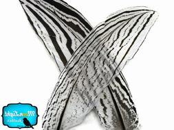 """Feathers, Pheasant Feathers, 10-12"""" Natural Silver Pheasant"""